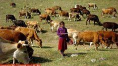 """İŞ-KUR, """"-Köylerimize de Çoban Desteği Versin"""""""