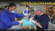 3 Aylık Buzağıya Fıtık Ameliyatı