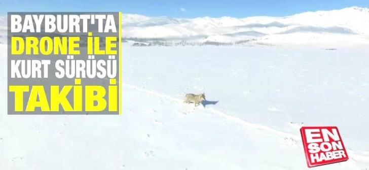 Bayburt'ta drone ile kurt sürüsü takibi