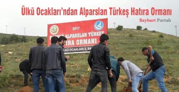 Ülkü Ocakları'ndan Alparslan Türkeş Hatıra Ormanı