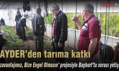 BAYDER, Bayburt'ta seracı yetiştiriyor