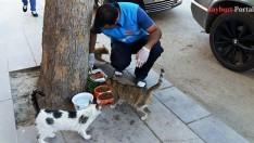 Sokak Hayvanları ve Yaban Hayatı için yiyecek