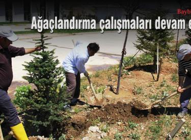 Park ve bahçelerde ağaçlandırma devam ediyor