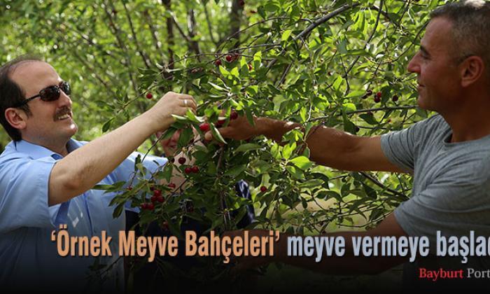 'Örnek Meyve Bahçeleri' meyve vermeye başladı