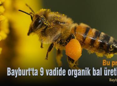 Bayburt'ta 9 vadide organik bal üretilecek